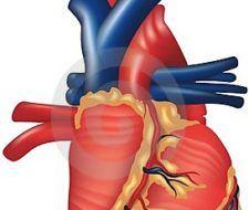 Grasa para regenerar el tejido del corazón