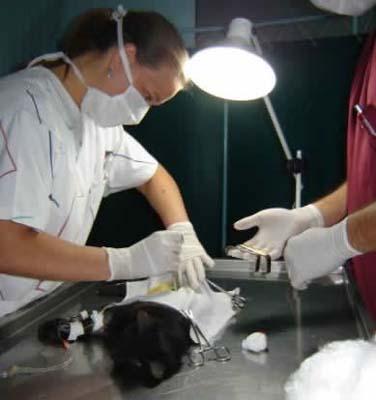 operacion-perro